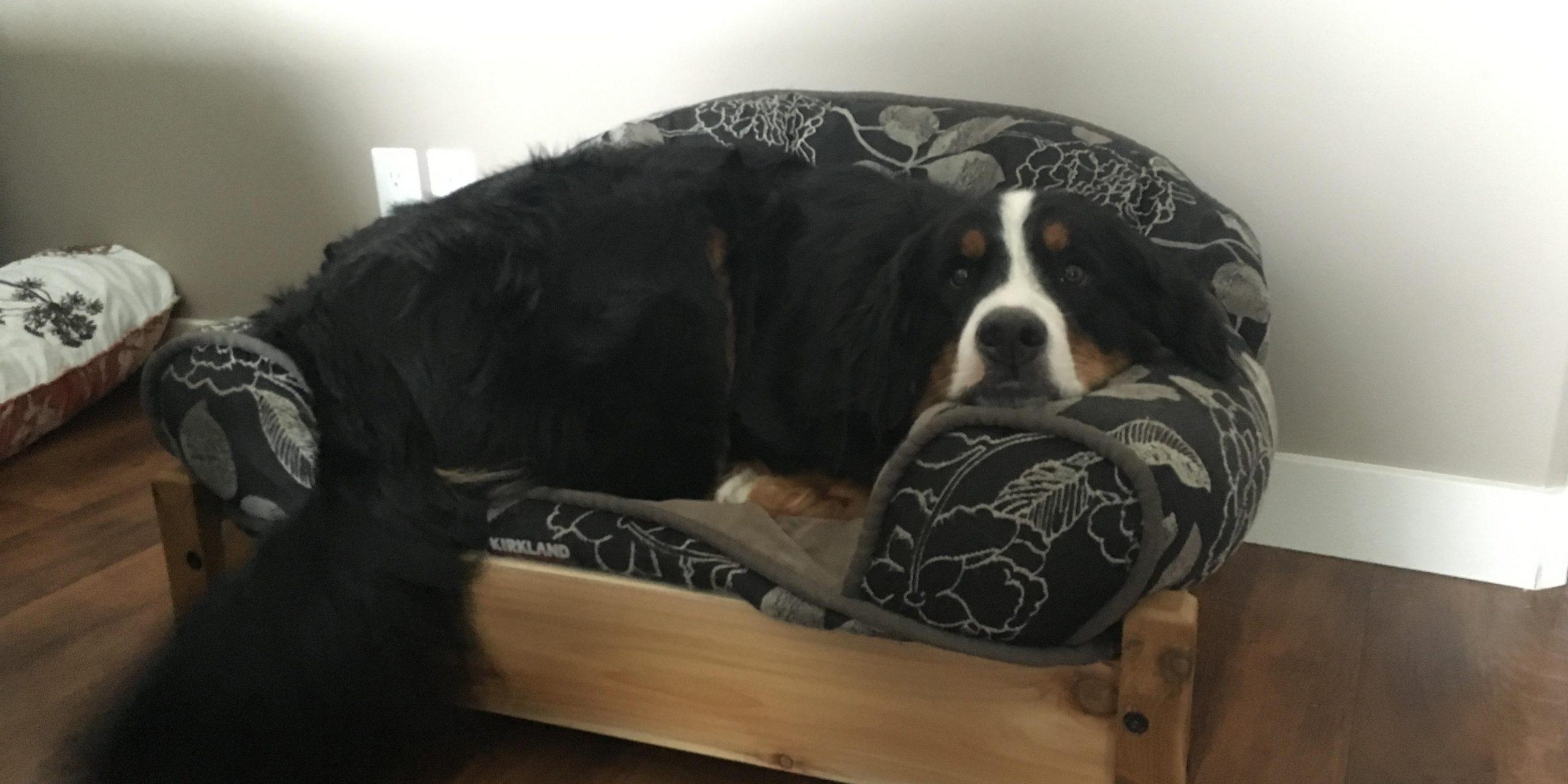 Aspen's Dog Bed